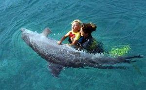 Contacto de humanos con delfines